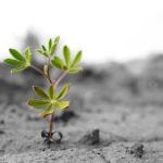 A esperança é uma virtude?