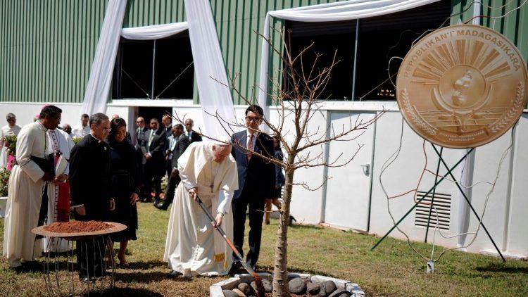 Papa planta árvore de baobá junto com presidente malgaxe